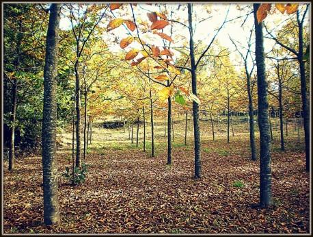 Bosque O Cangrexeiro PB070264a-1024x773