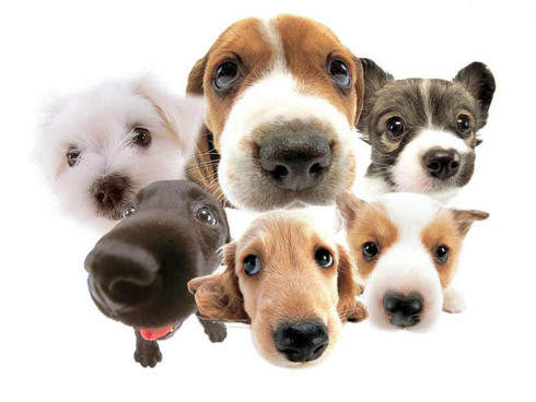 caes casfotos-varios-cachorros-pequenos