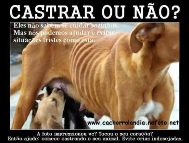 Projeto Castração de Animais Domésticos de Porto Alegre. RS