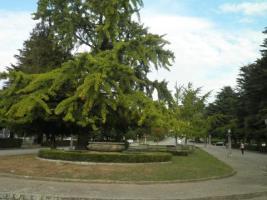 Jardim do ColégioFonseca