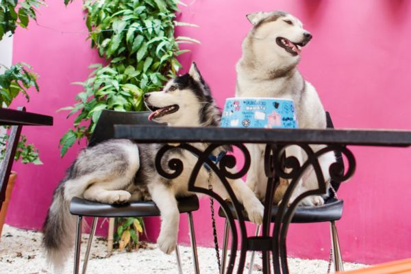 Dogs Passe Livre
