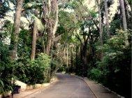 Bosque dos Jequitibás