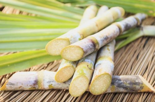 Close up Sugarcane