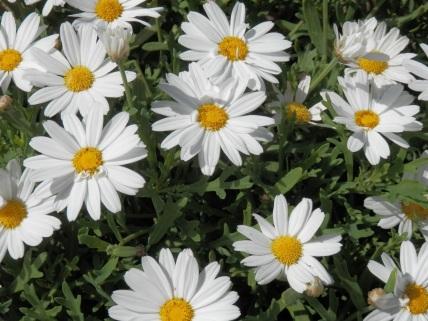 flor P5300053